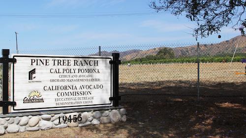 CAC 40th Anniversary   California Avocado Commission
