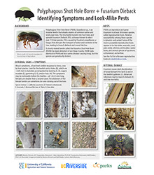 PSHB Identifying Symptoms and Look-Alike Pests