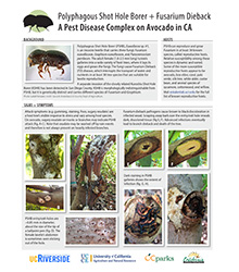 PSHB A Pest Disease Complex on Avocado in CA
