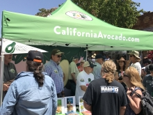 Leo McGuire, David Cruz, John Burr and Charley Wolk answer fans' questions about growing and preparing California avocados.