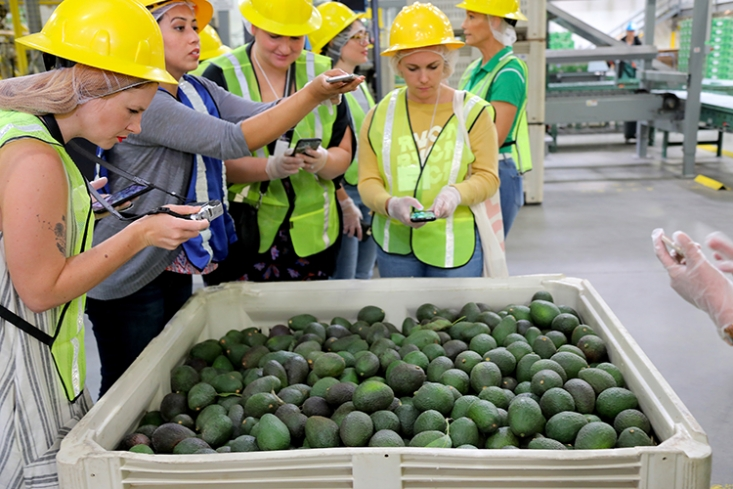 Media attendees (left to right: Corey Marshall, Tanaya Ghosh, Veronica Sooley-Pugh and Sarah Wright) snap a few photos during a West Pak Avocado, Inc. tour.