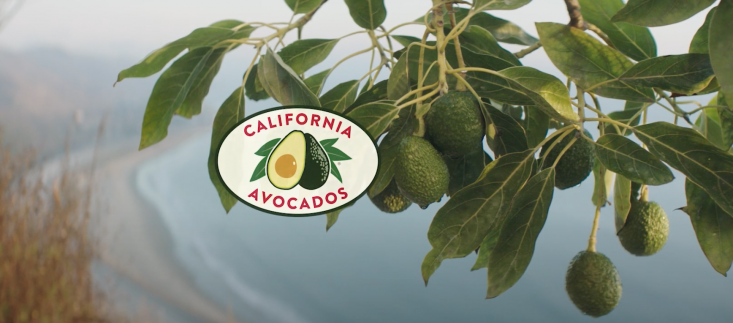 CAC's LinkedIn video post about California avocado growers had the best performance with more than 30,700 impressions.