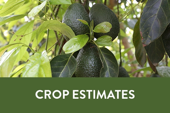 Crop Estimates